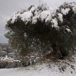 oliveto-horum-03