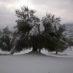 oliveto-horum-05