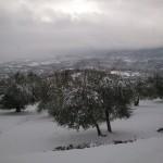 oliveto-horum-07