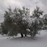 oliveto-horum-08