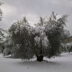 oliveto-horum-10